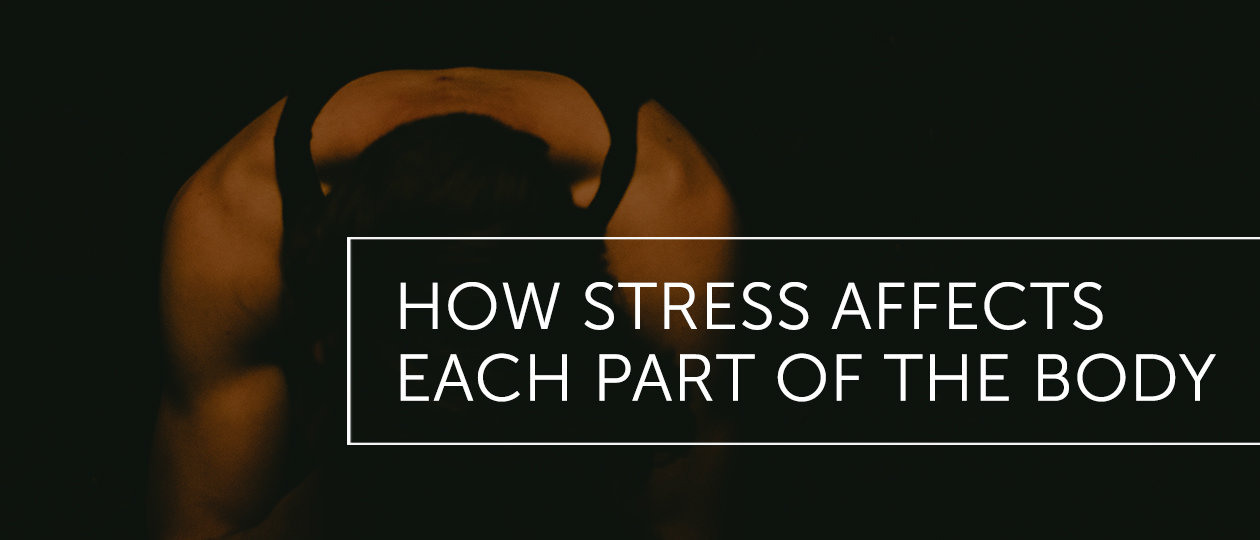 dal feb2019 blog header howstressaffectsbody