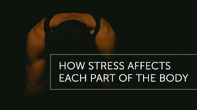 How Stress Affects Each Part of the Body